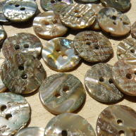 Back of Abalone shell buttons